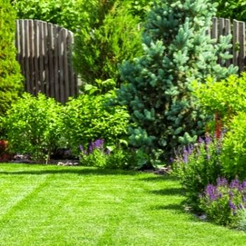 A perfectly laid turf in a backyard   Landscaping Melton